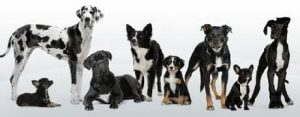 460_dog-multiplebreeds01-01