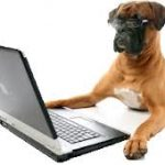 Boxer-on-computer-2-WS